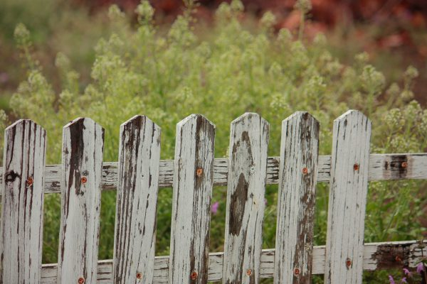Photo of a white picket fence with eroding paint in front of some green bushes