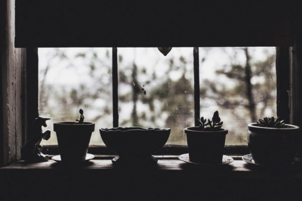 Photo of a line of baby potted plants silhouetted in front of a window.